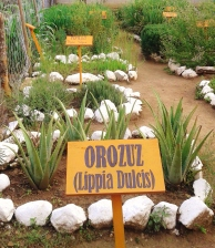 Herb garden at Q'omaneel.